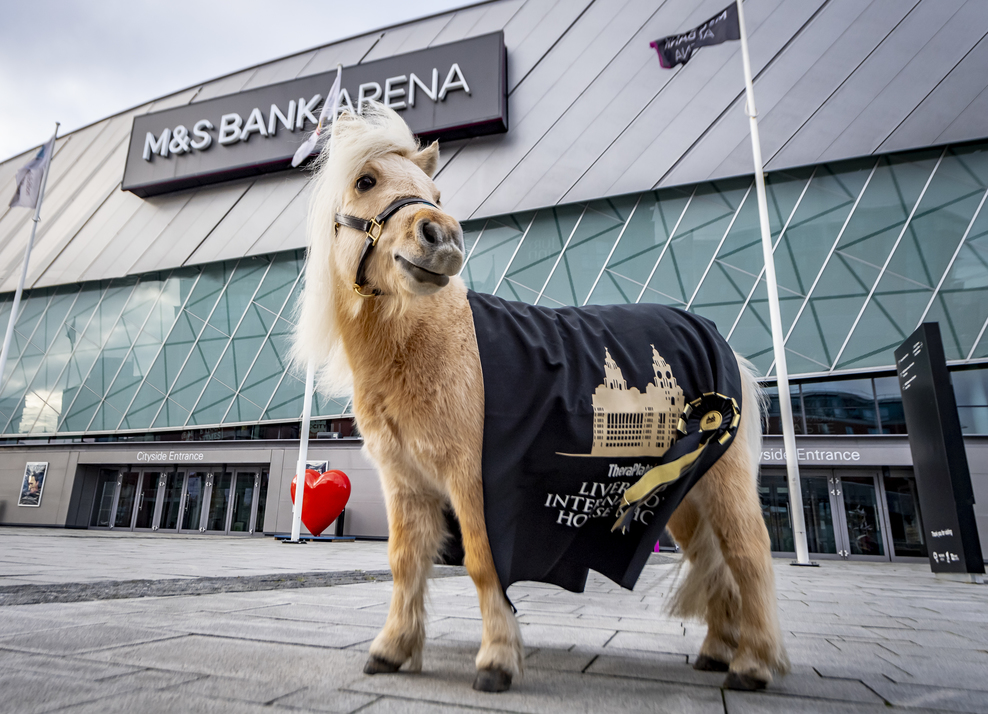 Teddy the Shetland Takes Liverpool by Storm